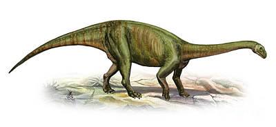 Massospondylus Carinatus, A Prehistoric Print by Sergey Krasovskiy