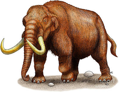 Mastodon Print by Roger Hall and Photo Researchers