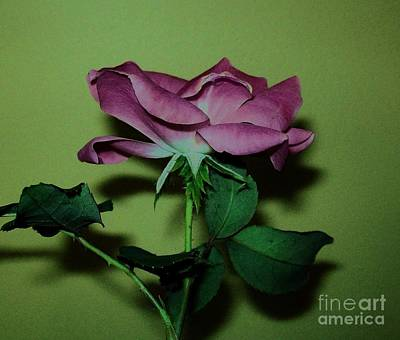 Mauve Rose Side View Print by Marsha Heiken