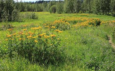 Meadow With Wildflowers Print by Jim Sauchyn