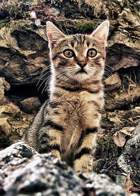 Mediterranean Wild Babe Cat Print by Stelios Kleanthous