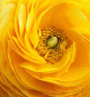Mellow Yellow Print by Kathy Yates