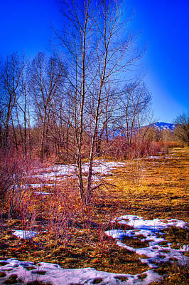 Denver Photograph - Melting Snow In South Platte Park by David Patterson