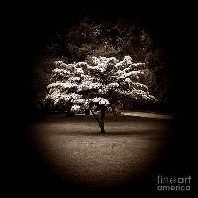 Locket Photograph - Memoir 1 by Luke Moore