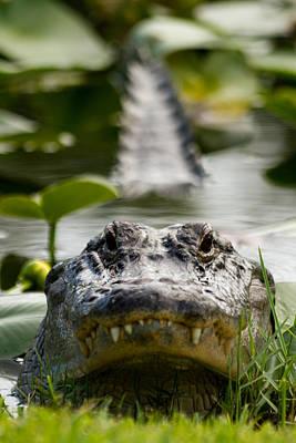 Menacing Gator Print by Andres Leon