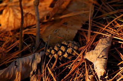 Leaf Photograph - Michigan Golden Sunset Pine Cone by LeeAnn McLaneGoetz McLaneGoetzStudioLLCcom