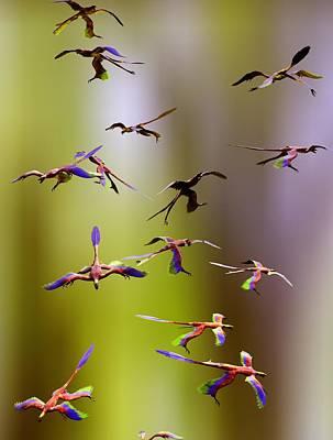 Microraptor Photograph - Microraptor Dinosaurs Flying, Artwork by Christian Darkin
