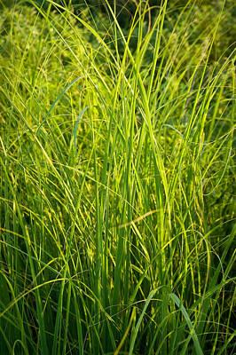 Corporate Art Photograph - Midwest Prairie Grasses by Steve Gadomski