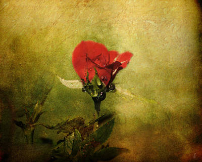 Antique Photograph - Miniature Red Rose I by Jai Johnson
