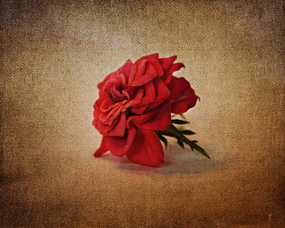 Antique Photograph - Miniature Red Rose IIi by Jai Johnson