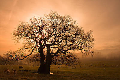 Misty Oak Print by Kris Dutson