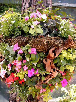 Mixed Impatiens In Driftwood Hanging Basket Print by Elaine Plesser
