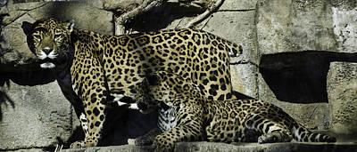 Cheetah Photograph - Mom And Baby Cheetah by Trish Tritz
