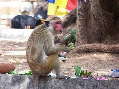 Monkey See Monkey Do Print by Steve Huang