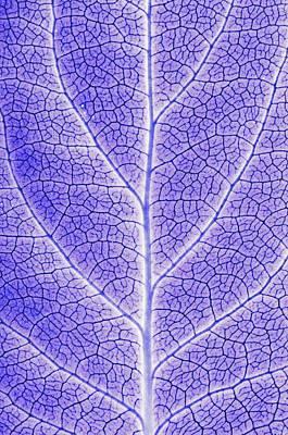 Monotone Close Up Of Leaf Print by Sean White