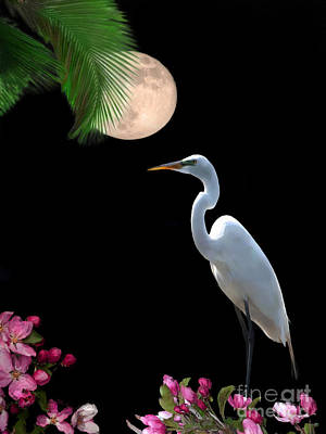 Egret Digital Art - Moon Over Florida by Betty LaRue