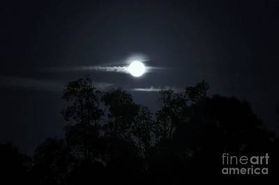 Moon Over Melaleucas Print by Lynda Dawson-Youngclaus
