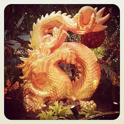 Dragon Photograph - More Dragons! #dragon #yearofthedragon by Christopher Hughes