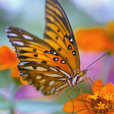 Blue Flowers Photograph - Morning Butterfly by Joel Olives