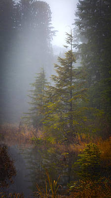 Bog Photograph - Morning Fall Colors by Mike Reid