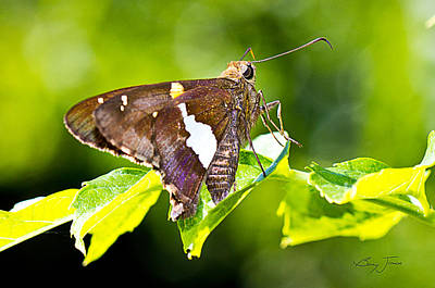 Butterfly Photograph - Morning Forage by Barry Jones