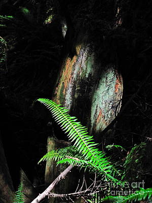 Nature Photograph - Morning Light - Fern And Shadow by Sean Griffin