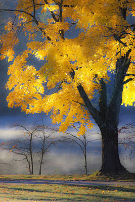 Morning Maple Print by Rob Travis