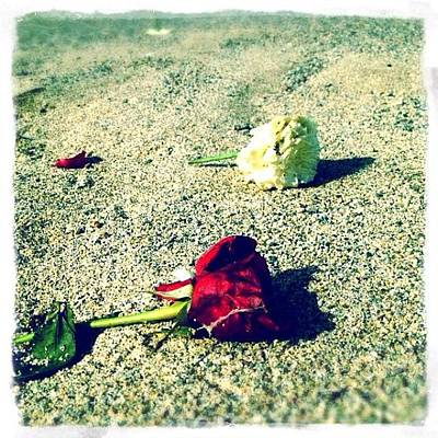 Roses Photograph - Morning Roses by Natasha Marco