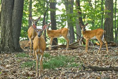 Whitetail Photograph - Morning Stroll 7717 by Michael Peychich