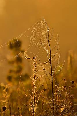 Morning Web Print by Joshua McCullough