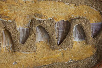 Mosasauras Teeth Print by Garry Gay