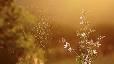 Mosquito Around Flowers Print by Paulo Dias Photography