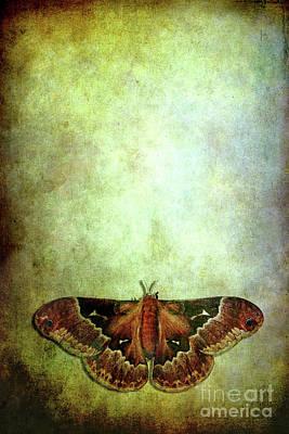 Moth Print by Stephanie Frey