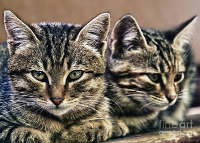 Grey Clouds Photograph - Mother And Child Wild Cats by Stelios Kleanthous