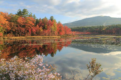 Mount Monadnock Foliage And Asters Print by John Burk