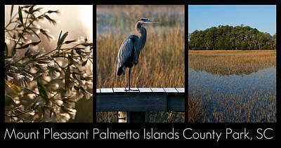 Blue Herron Photograph - Mount Pleasant Palmetto Islands County Park  by Melissa Wyatt