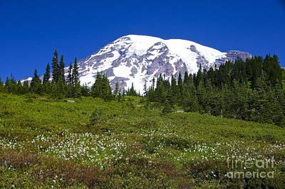 Mount Rainier In Summer Print by Sean Griffin
