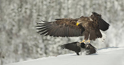 Eagle Photograph - Move It Sunshine by Andy Astbury