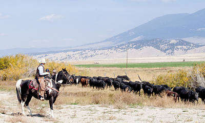 Daysray Photograph - Moving The Herd by Fran Riley