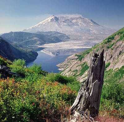 Tree Spirit Photograph - Mt. St. Helens by Danielle D. Hughson