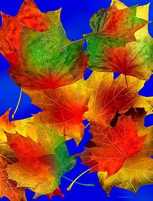 Colorful Photograph - Multi Color Autumn Leaf Art by Mario Perez