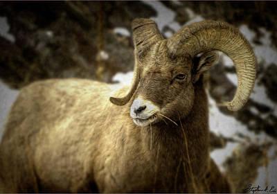 Photograph - Munching Ram  by Stephen EIS