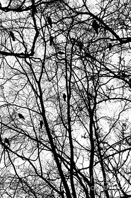 Murder Of Crows Print by Dean Harte