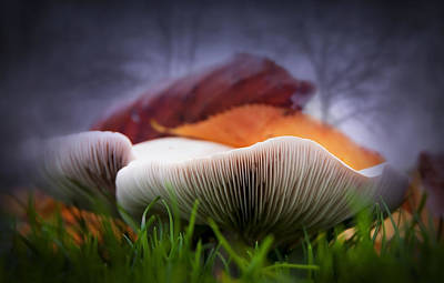 Mushrooms Close Up Print by Svetlana Sewell