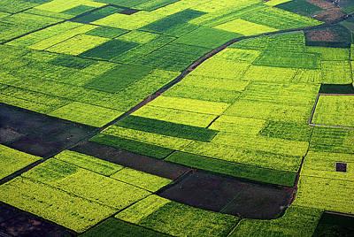 Bangladesh Photograph - Mustard Field by @SelimAzad