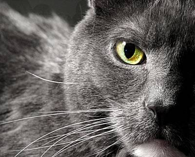 Green Eyes Photograph - My Eye's On You by Diana Lee Angstadt
