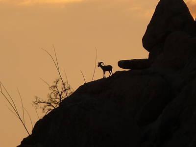 Rare Moments Photograph - My Friend At Sunset I by Carolina Liechtenstein