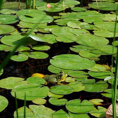 Toad Photograph - My Pad Or Yours by LeeAnn McLaneGoetz McLaneGoetzStudioLLCcom