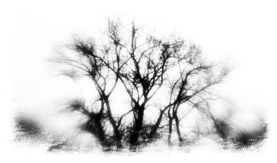 Mysterious Trees Print by David Ridley