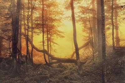 Mystical Forest Print by Lee-Anne Rafferty-Evans